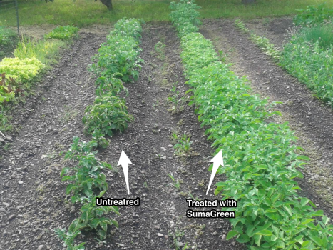 Healthy Fields | SumaGreen Microbial Soil Enhancer